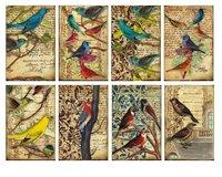 Paper set Mini/Birds
