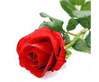 Servett Rosa Nobile
